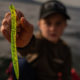 Soft Plastic Lure – How to Choose the Best Soft Bait