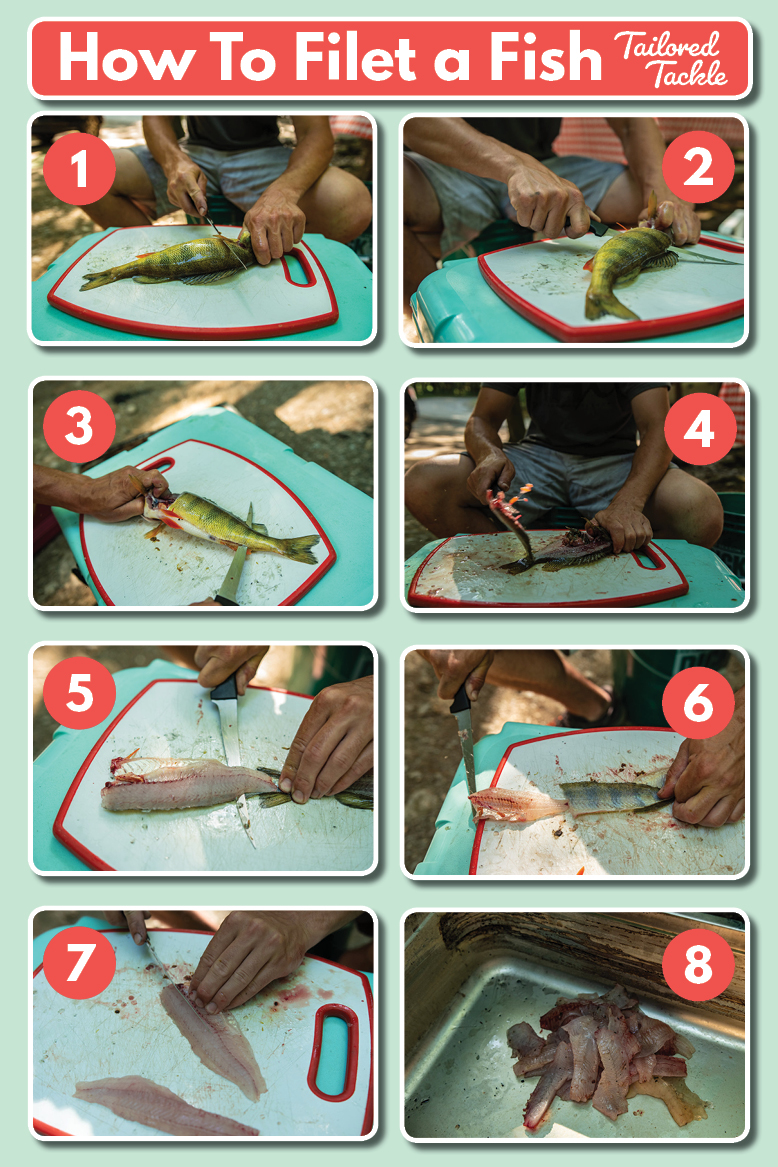 How to Clean a Fish Infographic Diagram PDF Instructions