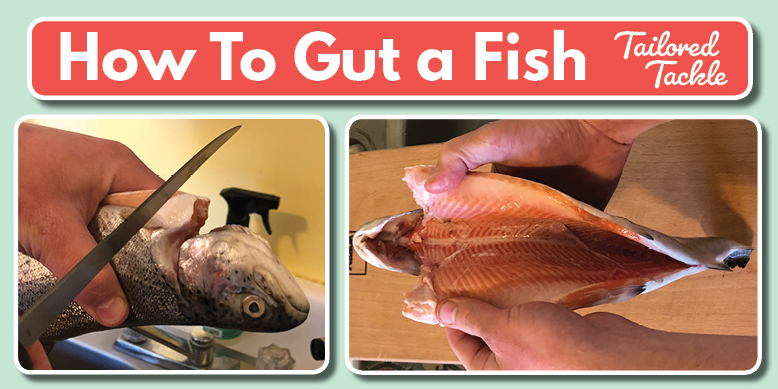 How to Gut a Fish How to Clean a Fish Tailored Tackle