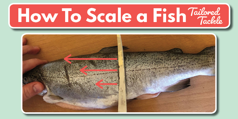 How to Scale a Fish How to Clean a Fish Tailored Tackle