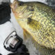 Ice Fishing for Crappie: 3 Key Tips for Crappie Slabs