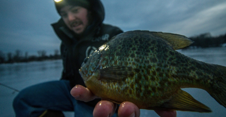 Ice Fishing for Bluegill: How to Catch Panfish Through the Ice