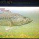 When do Bass Spawn: Fishing Bass Spawning Season