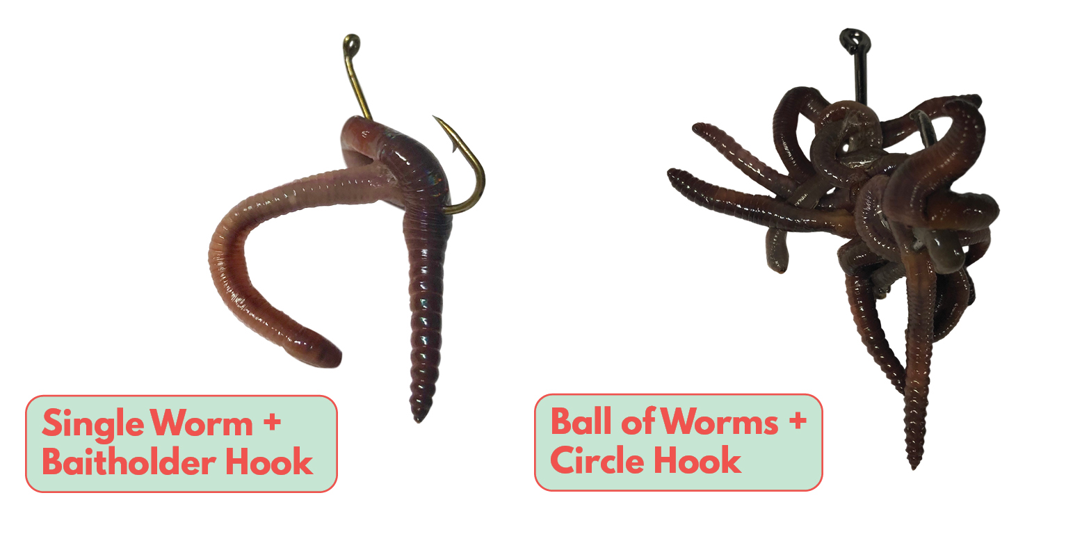 How to Bait a Worm Octopus Hook Circle Hook Tailored Tackle