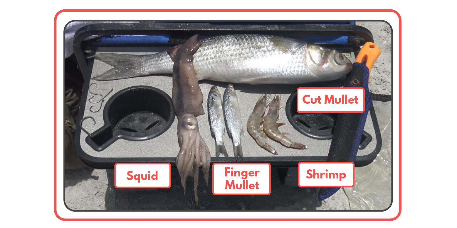Saltwater Bait Mullet Shrimp Squid Tailored Tackle 1