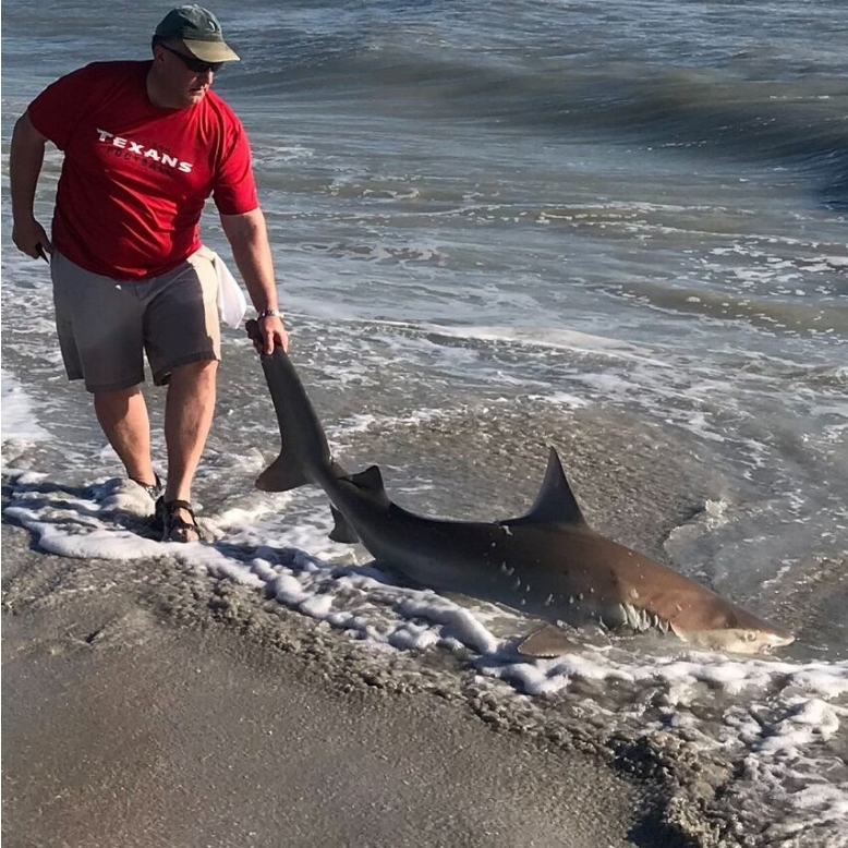 Surf Fishing for Black Tip Shark on the Beach Larger Sharks Tailored Tackle