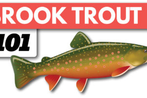 Brook Trout Fishing Beginners Guide on Spinning Gear Tailored Tackle