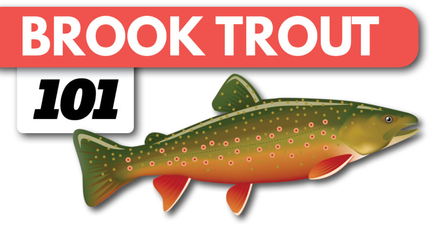 Brook Trout Fishing:  A Beginner's Guide on Spinning Gear