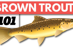 Brown Trout Fishing Beginners Guide on Spinning Gear Tailored Tackle