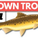 Brown Trout Fishing: A Beginner's Guide on Spinning Gear