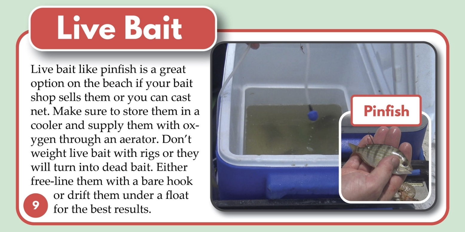 Live Bait for Snook Pinfish Florida Tailored Tackle