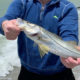 Snook Fishing in the Surf for Beginners