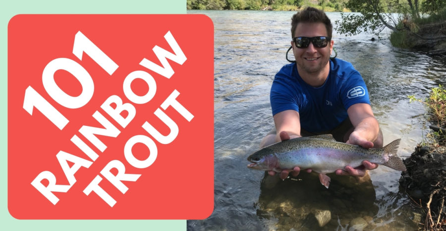 Rainbow Trout Fishing a Beginners Guide on Spinning Gear Tailored Tackle