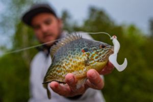 The-Best-Time-To-Fish-For-Bluegill-freshwater-fishing-tailored-tackle-4